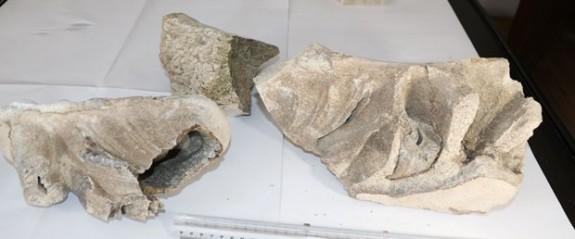 Yozgat'ta 8 milyon yıllık fosil bulundu