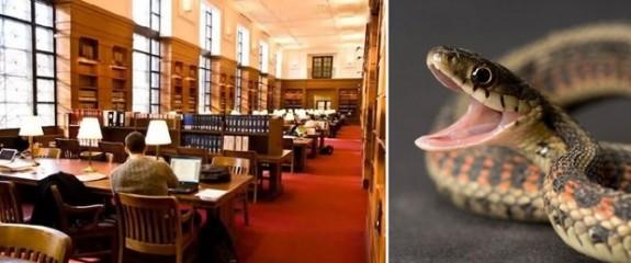 ABD'de kütüphaneyi yılanlar bastı