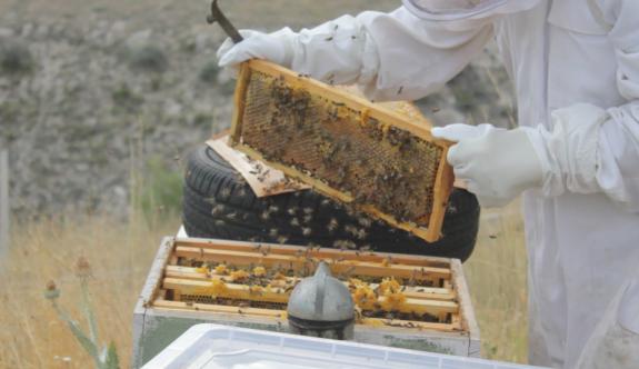 Arıcılar da kuraklık mağduru