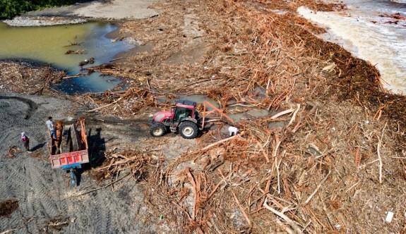 Denize sürüklenen ağaçları vatandaşlar topladı
