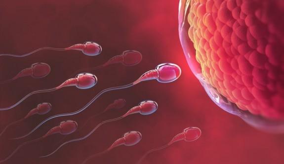 İşte sperm kalitesini artıran besinler
