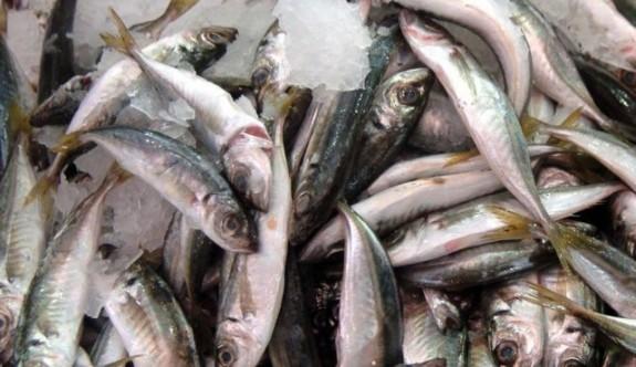 KKTC'den Güney Kıbrıs'a 174 ton taze balık