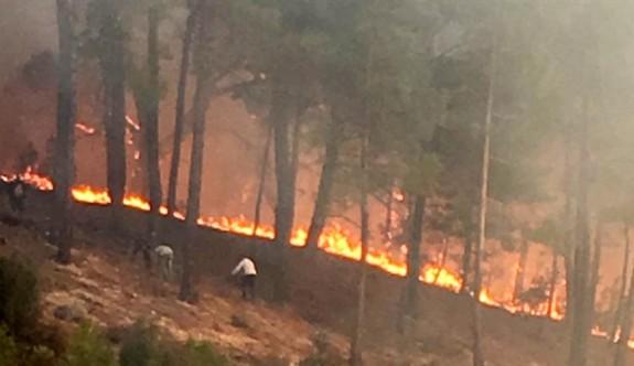 Orman Dairesi olası yangınlara karşı önlemleri artırdı
