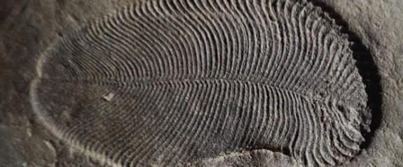 Bilinen en eski hayvan fosili bulundu