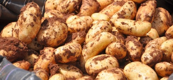 Güney'de patates fiyatları uçtu
