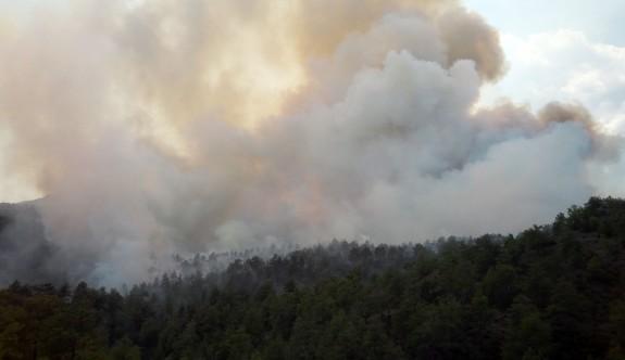 Güney Lefkoşa'daki yangında 70 hektarlık çam yandı