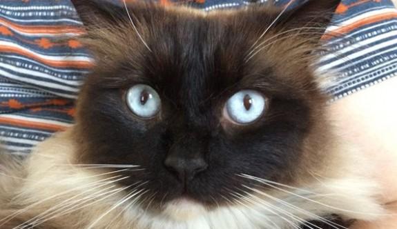 İngiliz polisinin üç yıl araştırdığı 'kedi seri katili' tilki çıktı