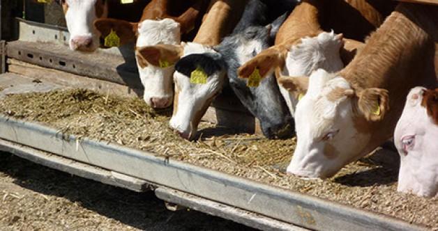 Karma hayvan yemi ithalatı serbest bırakıldı