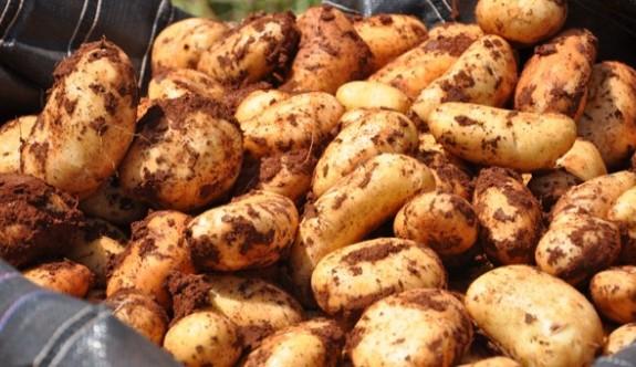 Patates ihraç ederken, ithal etmeye başladılar