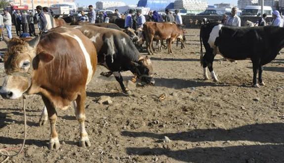 Devlet Üretme Çiftlikleri Sığırcılık Ünitesi kapatıyor