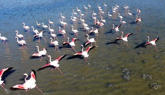 Flamingolardan Gülseren Göleti'nde görsel şov