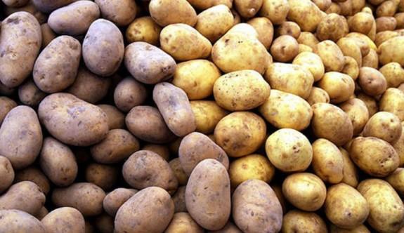 İthal patateste mantar hastalığı