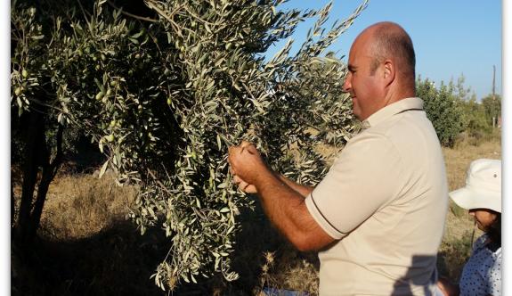 """""""Kıbrıs zeytinin dayanma ömrü uzun"""""""