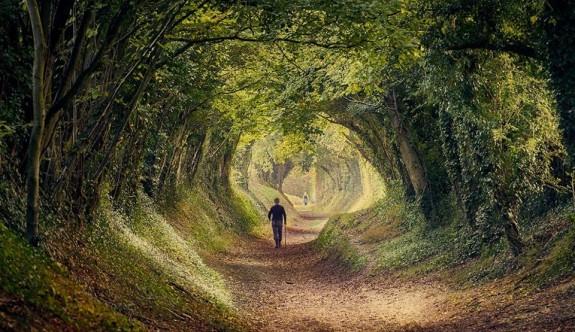 Mutlaka görmeniz gereken büyüleyici ağaç tüneller