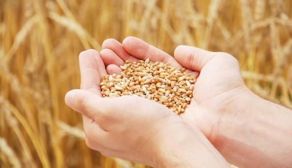 TÜK, tohumluk arpa ve buğday satışlarına başlıyor