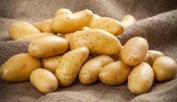 100 ton patates geri gönderildi