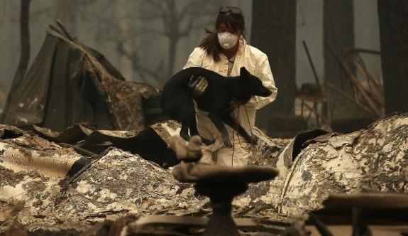 California'daki yangın sadece insanları etkilemedi