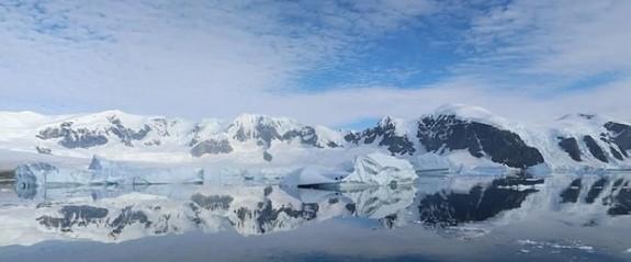 """Kuzey Kutup bölgesi kuşlar için artık """"güvenli liman"""" değil"""