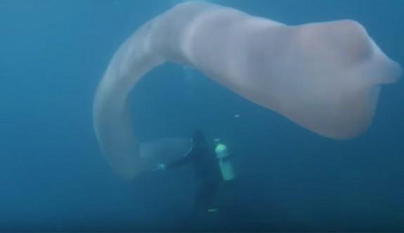 Su altında gizemli keşif