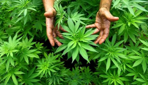 Dünyanın En Önemli Üretim Bitkisiyken Yasaklanan Kenevir Hakkında 18 Çok İlginç Bilgi