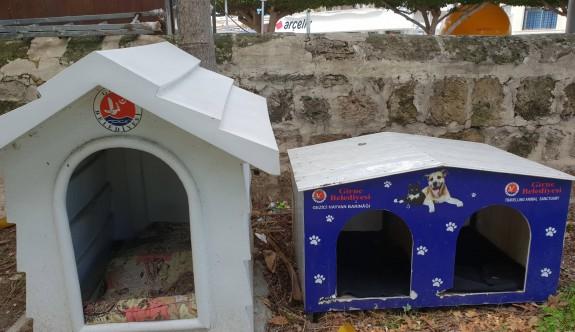 Girne Belediyesi'nden sokak hayvanları için çağrı