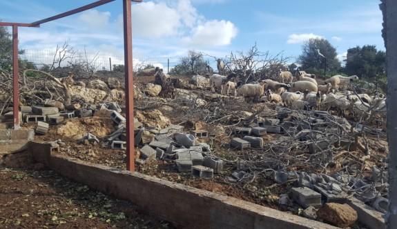 Tarım Bakanlığı zararın tespit edildiğini açıkladı