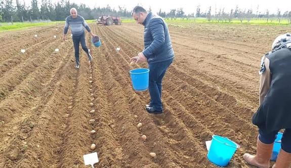 Yeni tür patates ekimi Türkmenköy'de yapıldı