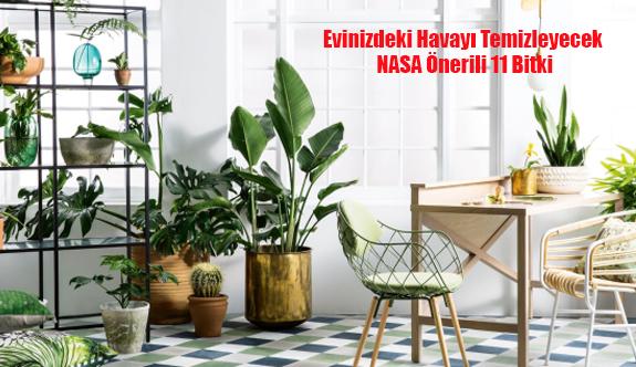 Evinizdeki Havayı Temizleyecek NASA Önerili 11 Bitki