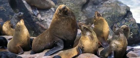 Mikroplastik deniz memelilerini tehdit ediyor