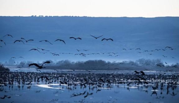 Milyonlarca kuşun yuvası Hula Vadisi