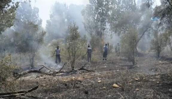 Aydınköy'de çıkan yangında 22 zeytin, 8 narenciye ağazı yandı