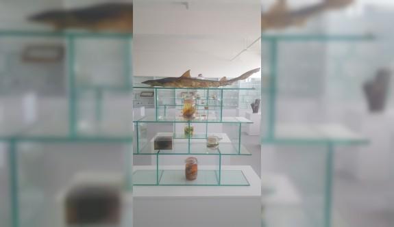 """""""Herbaryum ve Doğa Tarihi Müzesi"""" açılıyor"""