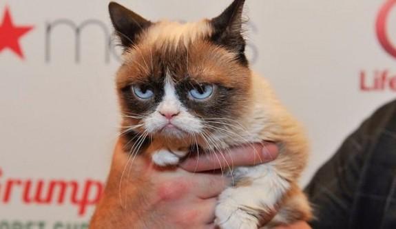 İnternet fenomeni somurtkan kedi hayatını kaybetti