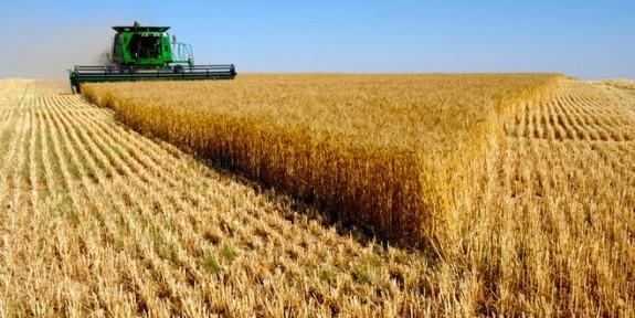 TÜK uyardı: Arpa ve buğday alım-satımı izne tabii