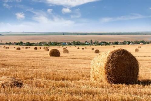 Çiftçi üretimden koparılmak isteniyor