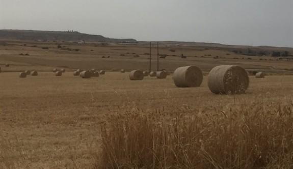 Hükümetin tahıl alım fiyatları belirlendi
