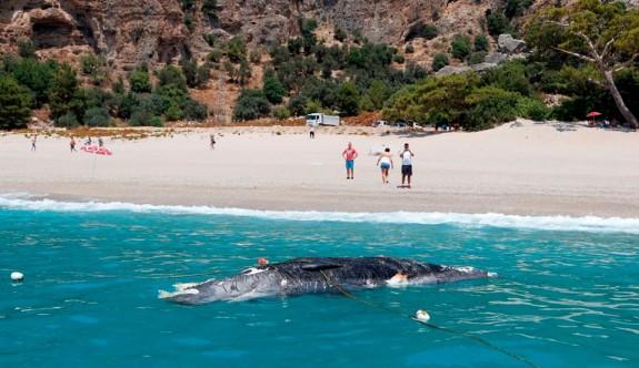 Ölüdeniz'de ölü balina kıyıya vurdu
