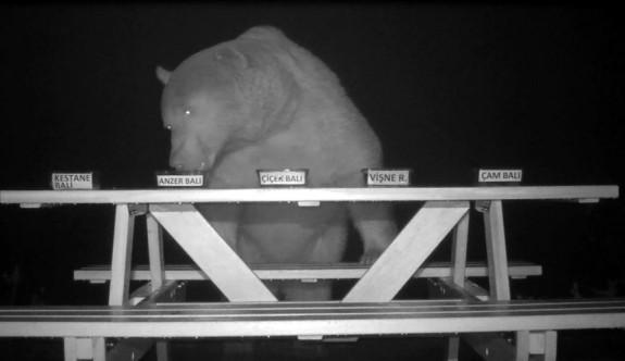 Ayıların bal testi izleyenleri şaşkına çevirdi