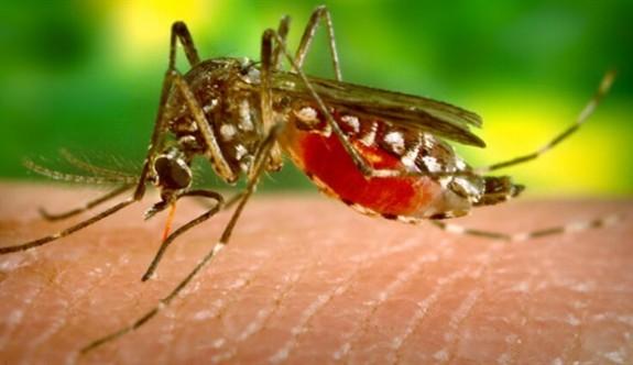 Batı Nil Virüsü teşhisiyle tedavi gören Kasım Aktaş hayatını kaybetti