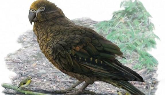 Bir metrelik papağan fosilli herkesi şaşırttı