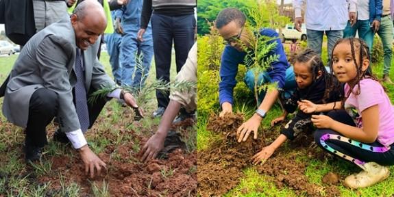 Etiyopya'dan ağaç dikme rekoru