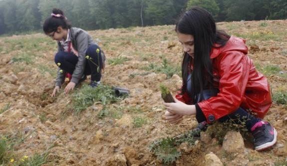 Güney Lefkoşa'ya 300 bin ağaç dikecekler