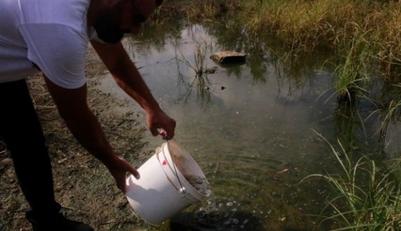 Mağusa Belediyesi Çanakkale Göleti'ne sivrisinek yiyen balıklar bıraktı