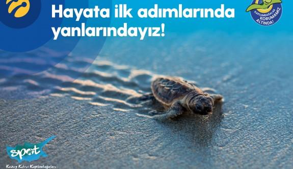 Yavru kaplumbağalar hayata ilk adımlarını atacak