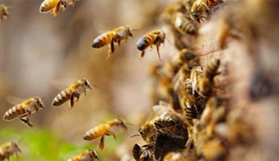 Arıların saldırdığı 19 işçi hastaneye kaldırıldı