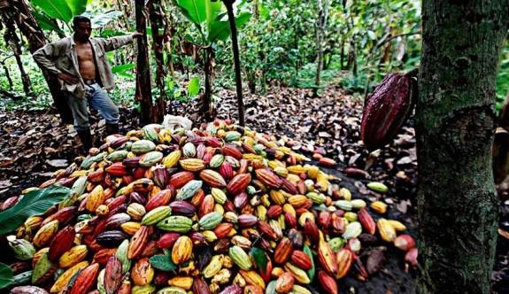 Kakaonun hikayesi