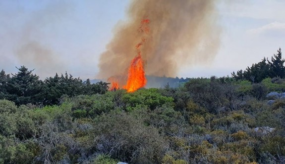 Kantara bölgesinde büyük yangın