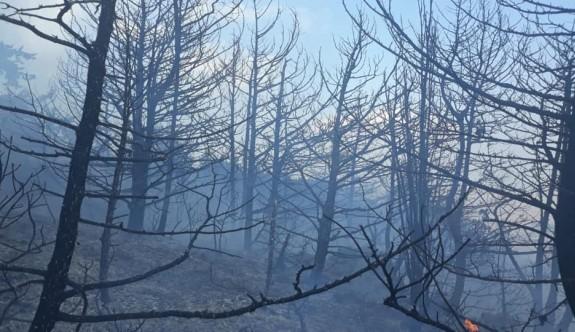 Kantara için ağaçlandırma kampanyası