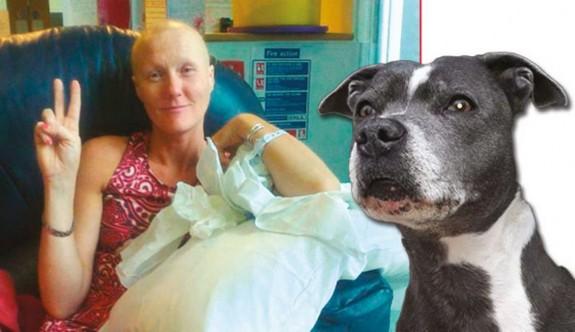 Köpekleri sayesinde kanser olduğunu öğrendiler