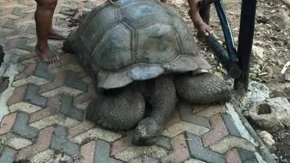Afrika'nın en yaşlı kaplumbağası öldü